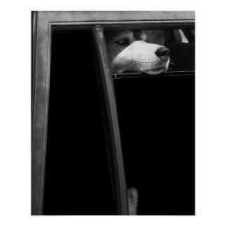 Doggy in the Window Print