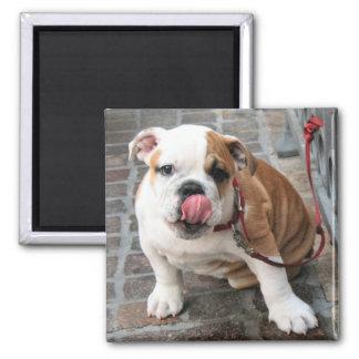 Doggy Kisses Fridge Magnet