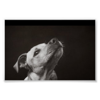 Doggy looking up poster