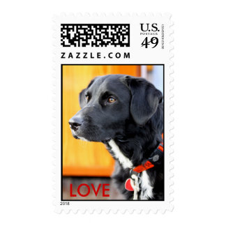 Doggy LOVE Postage Stamp