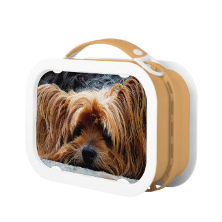 Doggy Lunch Box
