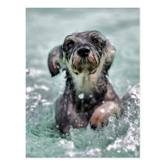 Doggy Paddle Postcard