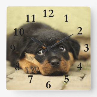 Doggy picture square wall clock