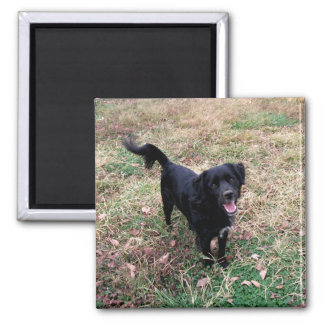 Doggy Pose 2 Inch Square Magnet