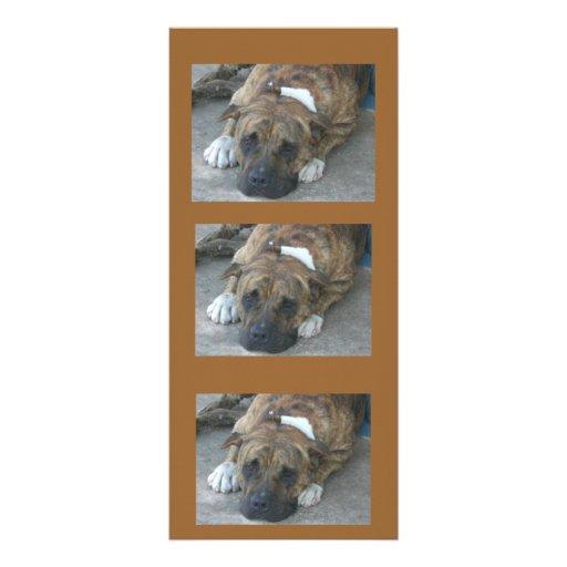 Doggy Pose Customized Rack Card