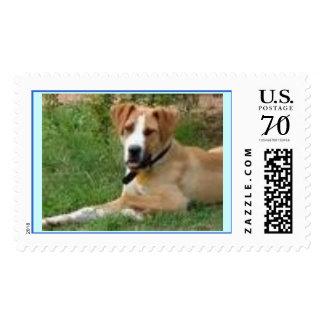 doggy postage