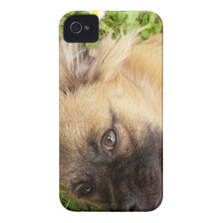 Doggy style Case-Mate iPhone 4 cases