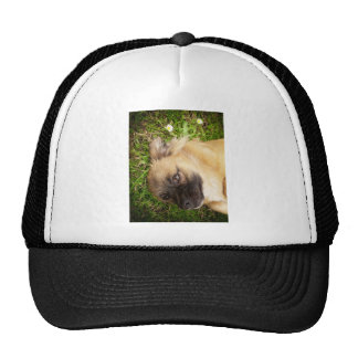 Doggy style mesh hat