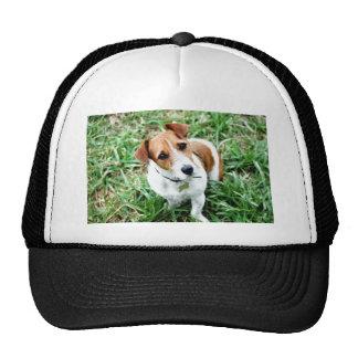 Doggy Trucker Hat