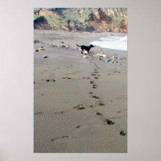doggyprints póster