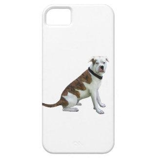 Dogo alfa de la sangre azul (a) iPhone 5 fundas