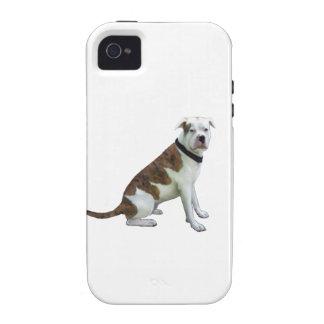 Dogo alfa de la sangre azul (a) vibe iPhone 4 fundas