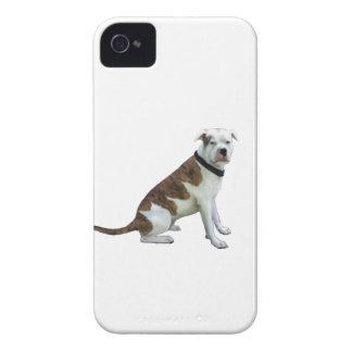 Dogo alfa de la sangre azul (a) iPhone 4 Case-Mate protectores
