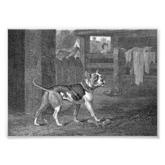 Dogo - arte blanco y negro fotografias