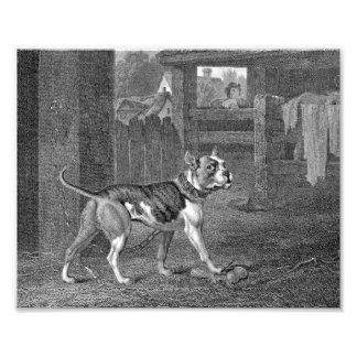 Dogo - arte blanco y negro arte con fotos