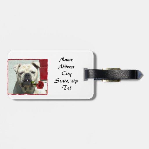 Dogo blanco con el rosa etiqueta para maleta