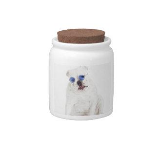 Dogo blanco con las sombras teñidas azul jarras para caramelos