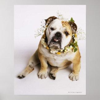 Dogo con el cuello de la flor póster