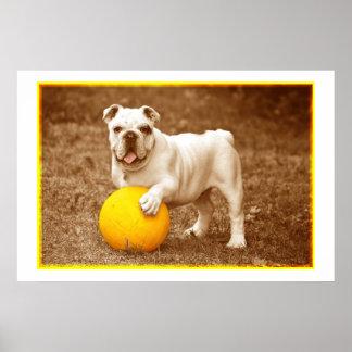 Dogo con el poster de la bola póster