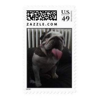 Dogo de Englich, mascota divertido Sello