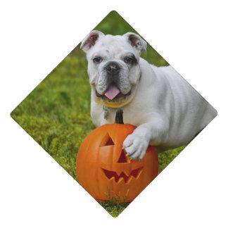 Dogo de Halloween