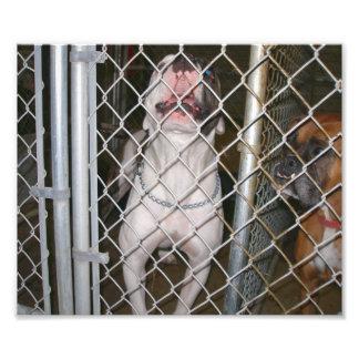 Dogo de risa dentro de una jaula fotografias