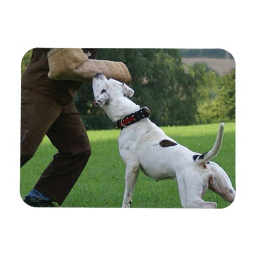 Dogo del americano de Schutzhund Imán De Vinilo
