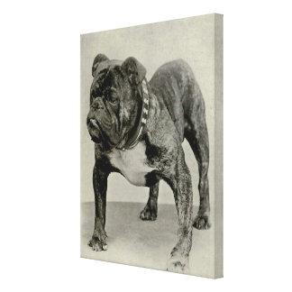 Dogo del inglés del vintage impresión en lienzo