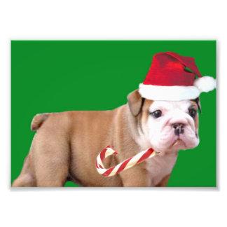 Dogo del navidad arte con fotos