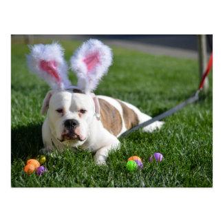 Dogo del valle de Pascua Postal
