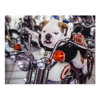 Dogo en la motocicleta tarjetas postales