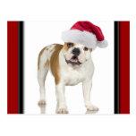 Dogo en navidad del gorra de Santa Postales