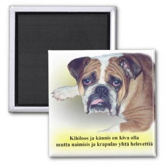 Dogo finlandés de la resaca imán de nevera