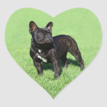 Dogo francés 2 pegatina en forma de corazón