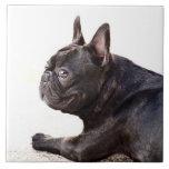Dogo francés azulejo cuadrado grande