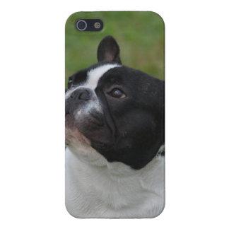 Dogo francés blanco y negro iPhone 5 fundas
