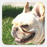 Dogo francés calcomania cuadradas personalizada
