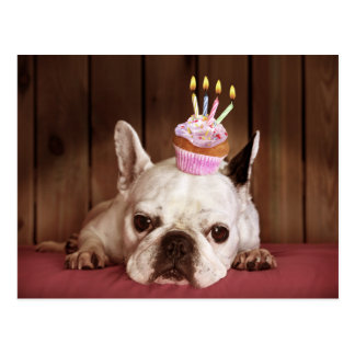 Dogo francés con la magdalena del cumpleaños postal