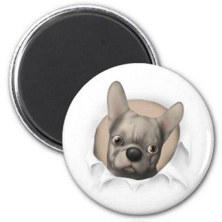 Dogo francés (de color de ante) que revienta hacia imán redondo 5 cm