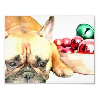 Dogo francés del navidad arte fotografico