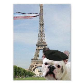 Dogo francés en París Fotografías