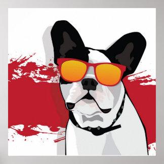 Dogo francés en poster de las gafas de sol