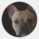 Dogo francés etiqueta redonda