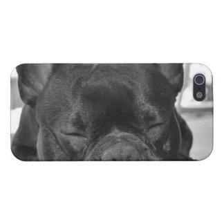 Dogo francés iPhone 5 protector