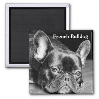 Dogo francés iman para frigorífico