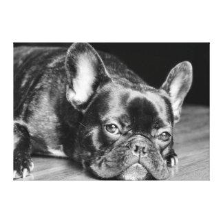 Dogo francés lienzo envuelto para galerías