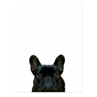 Dogo francés lindo postal