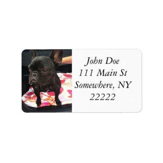 Dogo francés negro etiqueta de dirección