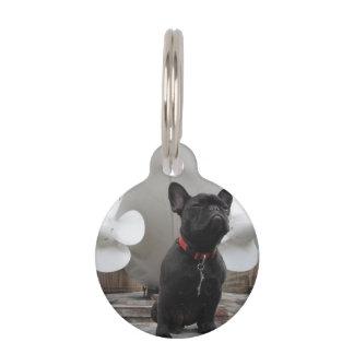 Dogo francés negro identificador para mascota