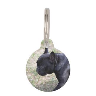 Dogo francés negro lindo placa de mascota